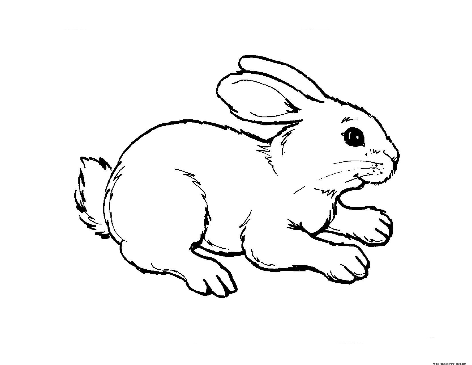 animal coloring pages for kids cartoon animal coloring pages for animal kids coloring pages