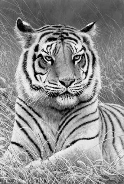 animal grayscale coloring pages 1000 images about printable grayscale coloring pages on coloring grayscale pages animal