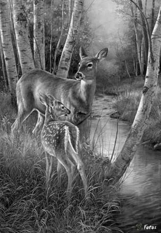 animal grayscale coloring pages 2330 best images about drawings on pinterest dovers pages coloring animal grayscale