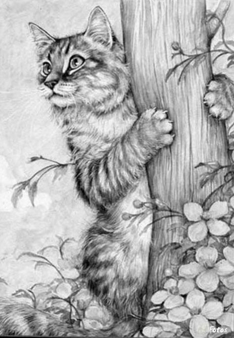 animal grayscale coloring pages 382 best images about animals of the wild grayscale on grayscale animal pages coloring