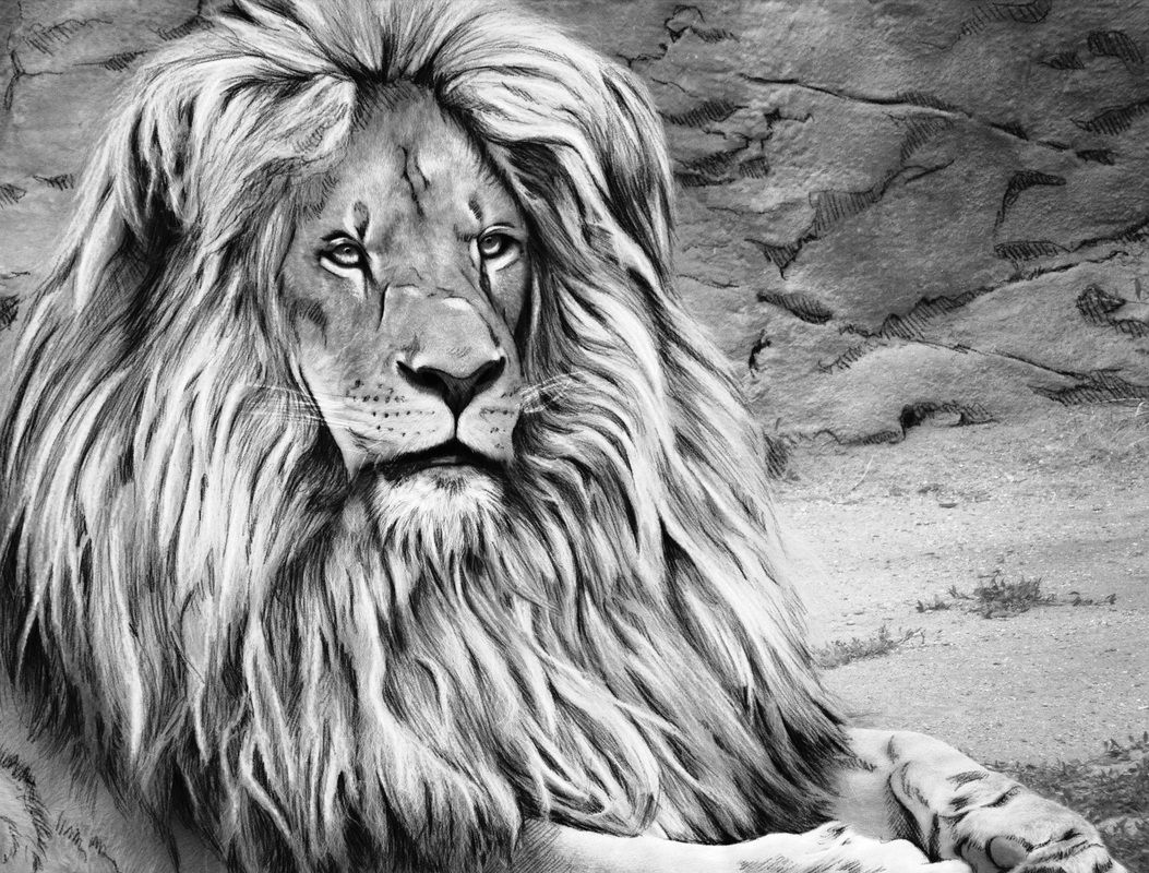 animal grayscale coloring pages 390 best images about grayscale coloring pages on animal grayscale coloring pages