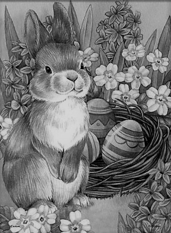 animal grayscale coloring pages 606 best grayscale pics images on pinterest drawings coloring pages grayscale animal
