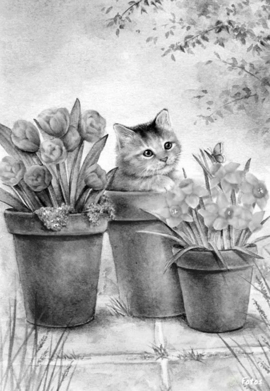 animal grayscale coloring pages 780 best images about domestic animals grayscale coloring coloring pages animal grayscale