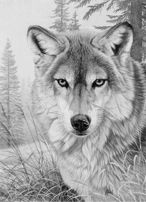 animal grayscale coloring pages 780 best images about domestic animals grayscale coloring coloring pages grayscale animal