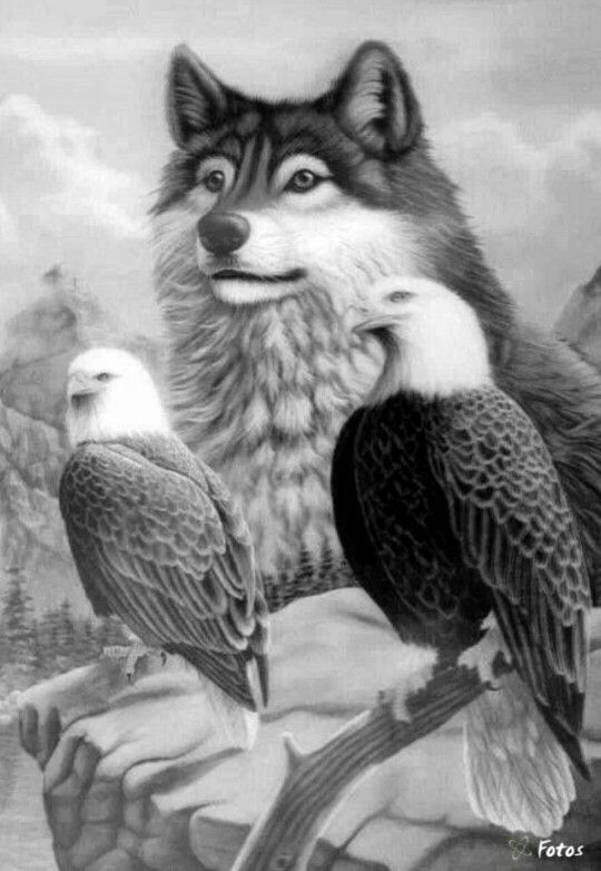 animal grayscale coloring pages grayscale coloring on pinterest coloring for adults pages grayscale animal coloring