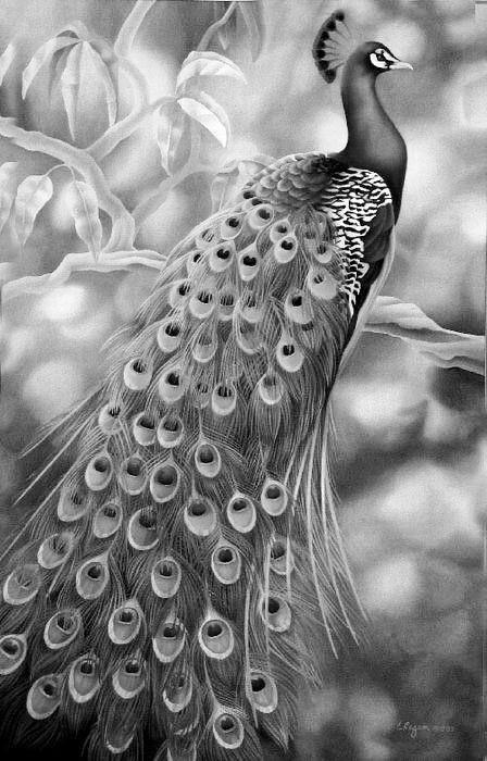 animal grayscale coloring pages grayscale peacock coloring pages grayscale image pages coloring grayscale animal