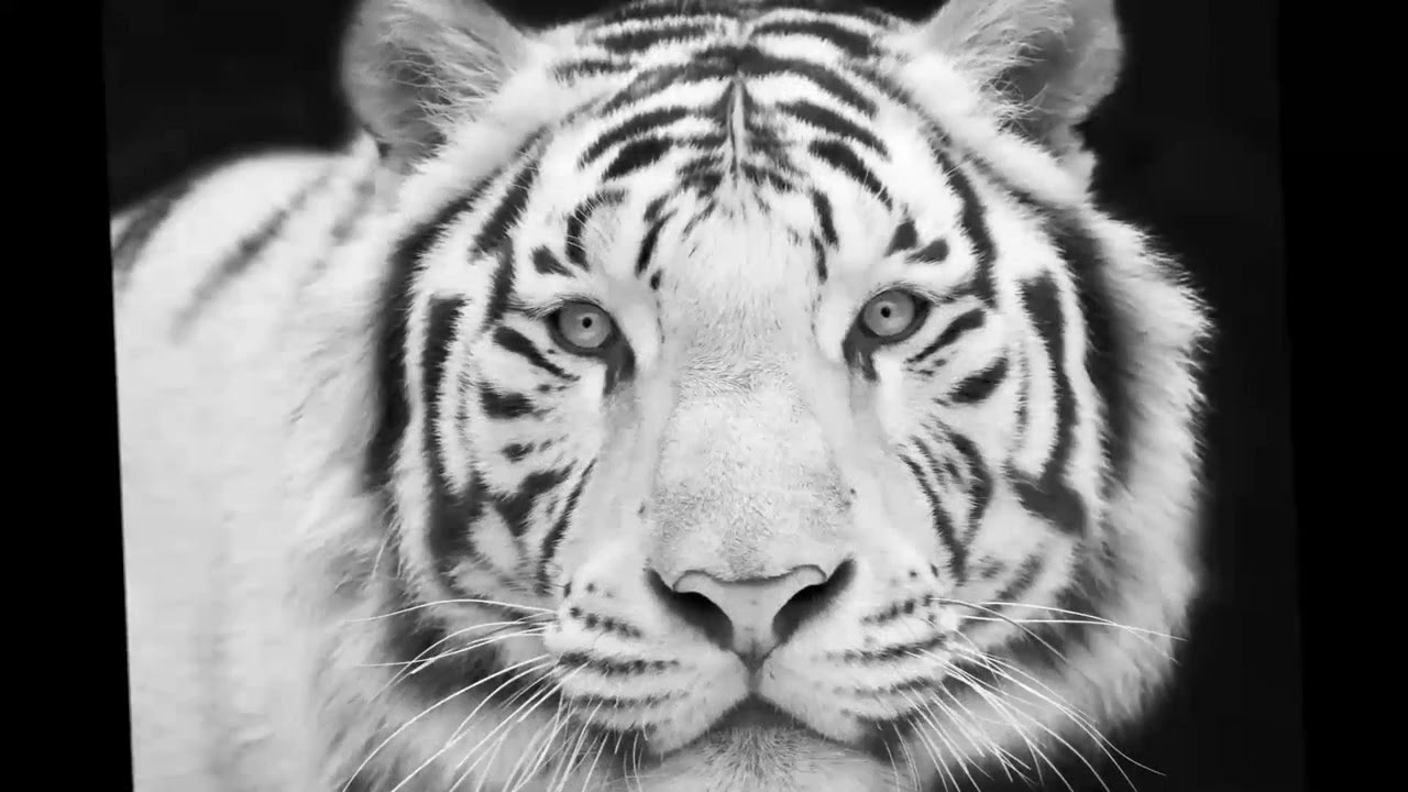 animal grayscale coloring pages macro nature grayscale photo coloring book for adults pages animal coloring grayscale