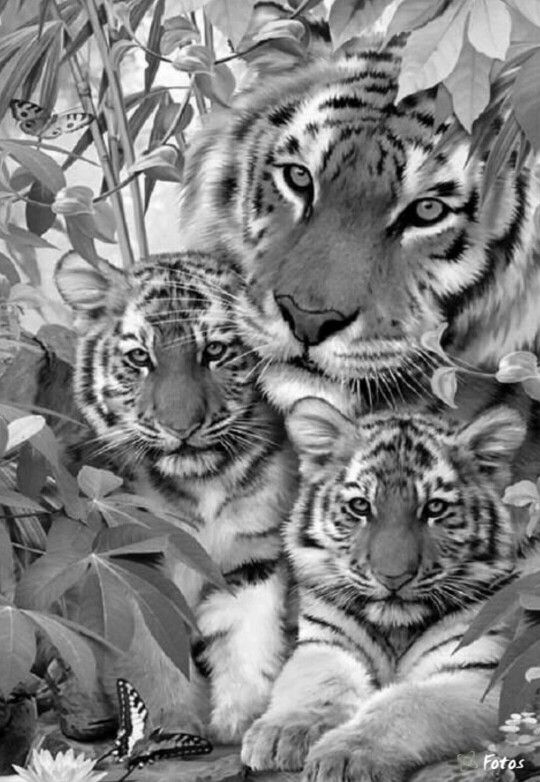 animal grayscale coloring pages wolf coloring pages for adults wolf coloring page in grayscale animal pages coloring