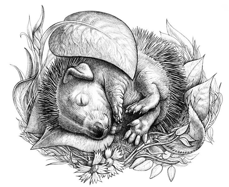 animal grayscale coloring pages wonderful free grayscale coloring pages strategies the animal coloring grayscale pages