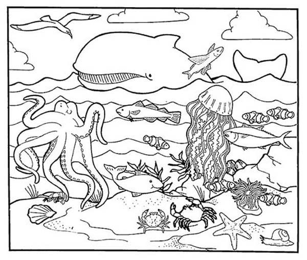 animal habitat coloring 80 coloring pages of wetland animals grassland coloring animal habitat