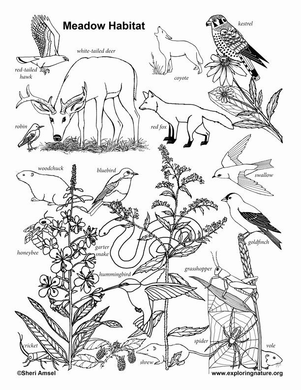 animal habitat coloring animal habitat coloring pages google search 1st grade animal coloring habitat