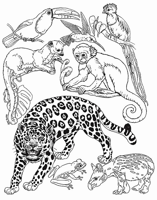 animal habitat coloring animal habitat coloring pages google search 1st grade habitat animal coloring