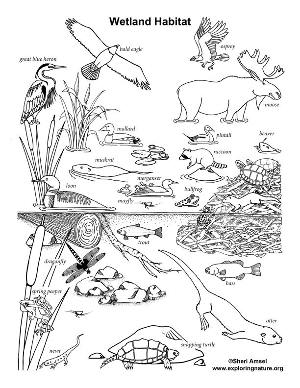 animal habitat coloring coloring pages wildlife research conservation animal coloring habitat