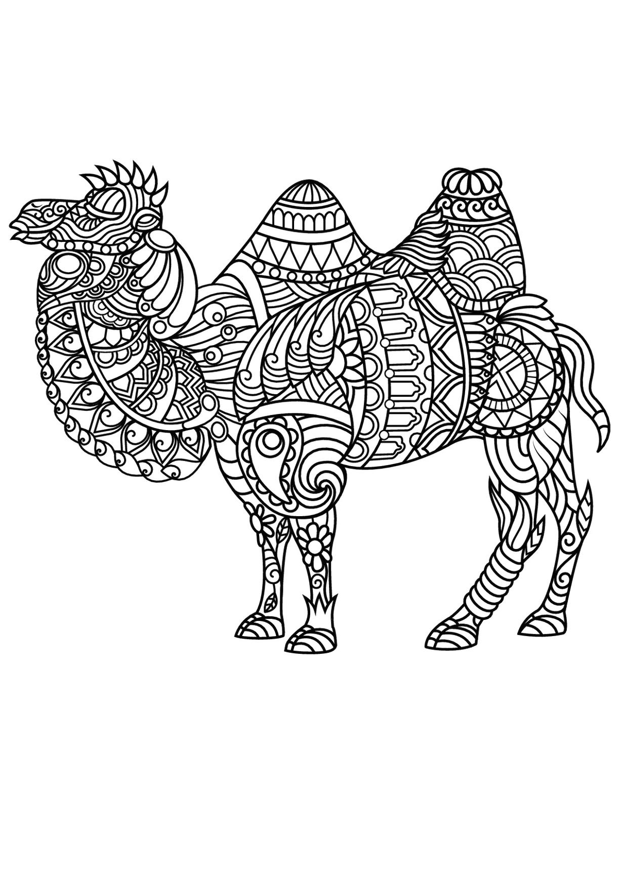 animal pictures coloring pages get this adult coloring pages animals camel 1 animal coloring pages pictures