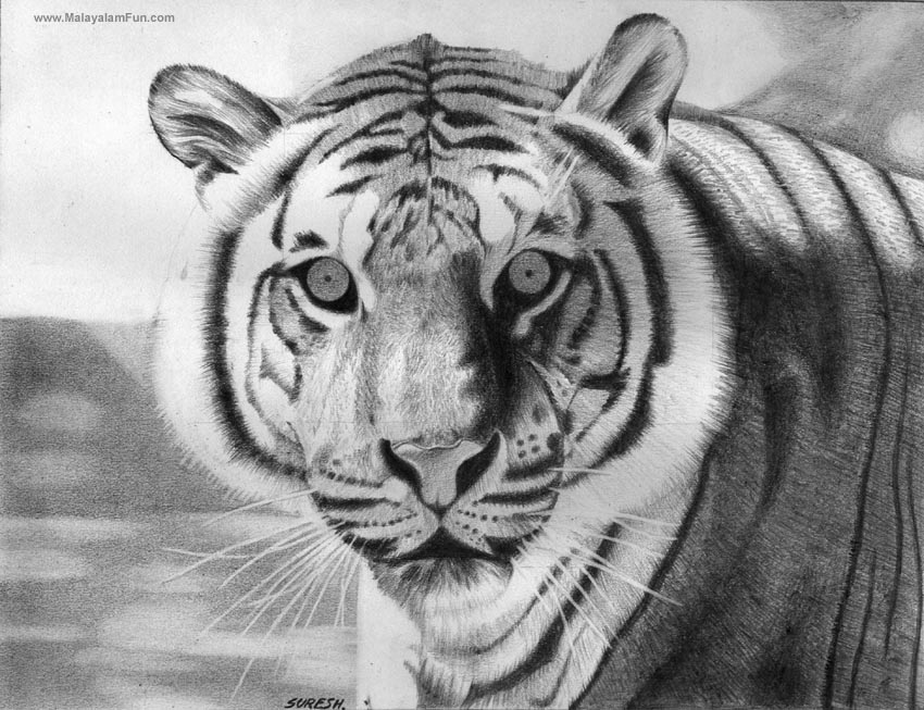 anime animal drawings 26 stunning drawings of animals made from pencil and paper drawings animal anime