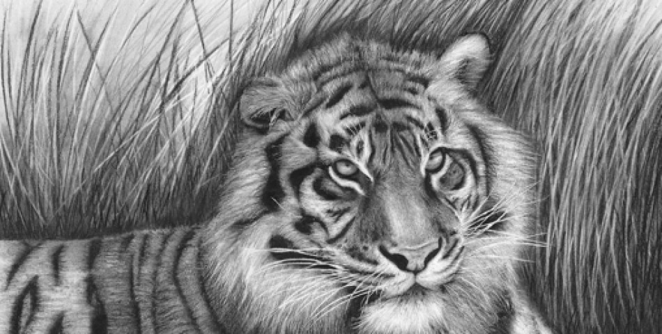 anime animal drawings 50 easy pencil drawings of animals that look so realistic drawings animal anime