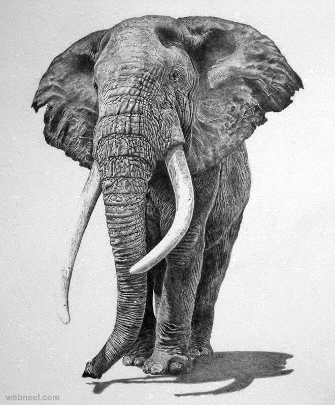 anime animal drawings 85 simple and easy pencil drawings of animals for every animal anime drawings