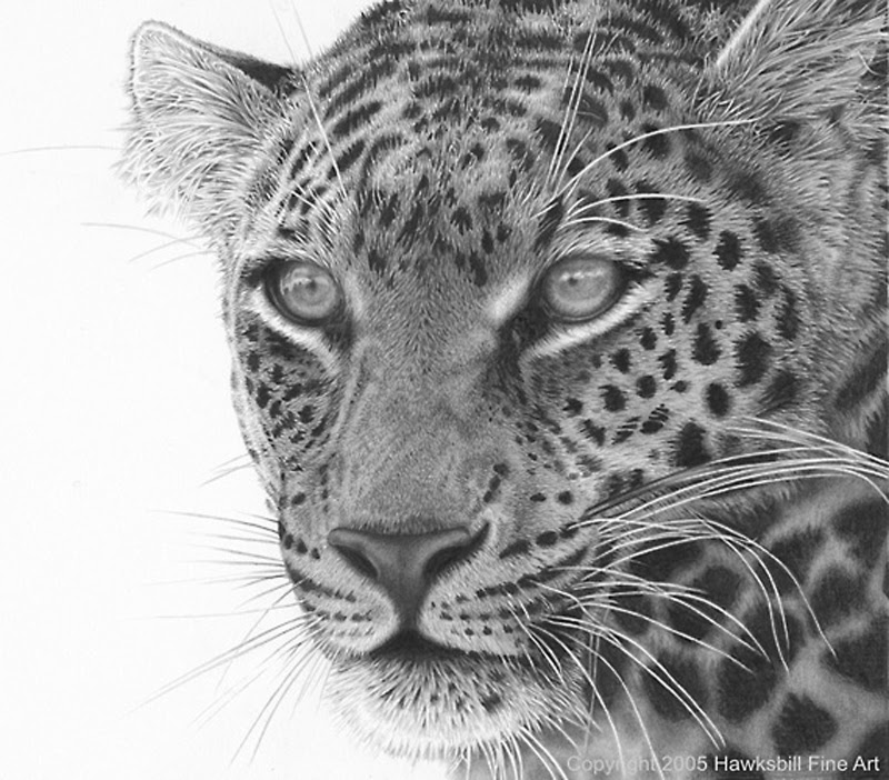 anime animal drawings how to draw realistic animal fur explained by autistic animal anime drawings