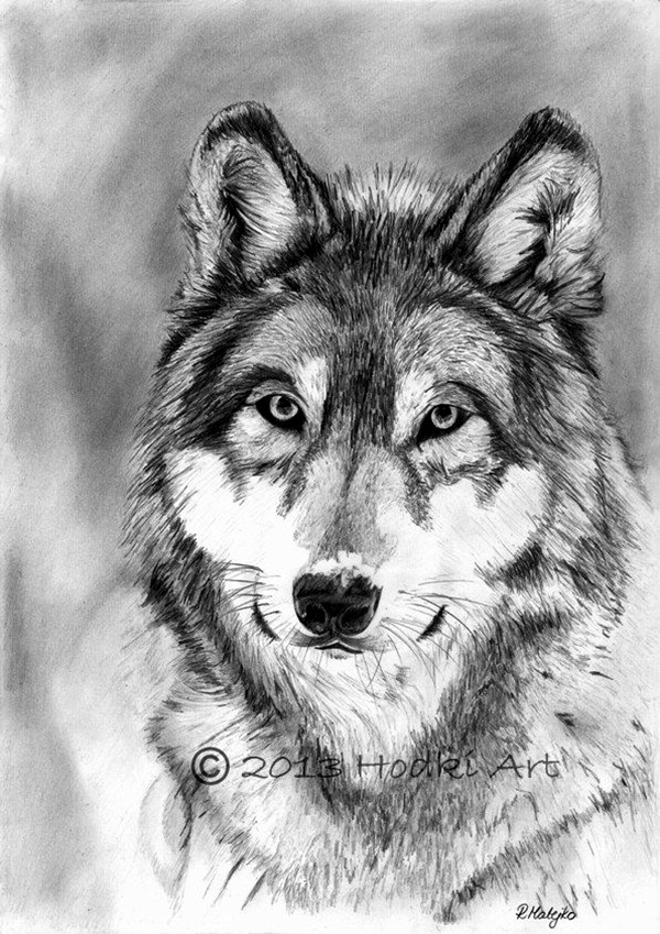 anime animal drawings pencil drawings of animals very artistic xcitefunnet anime animal drawings