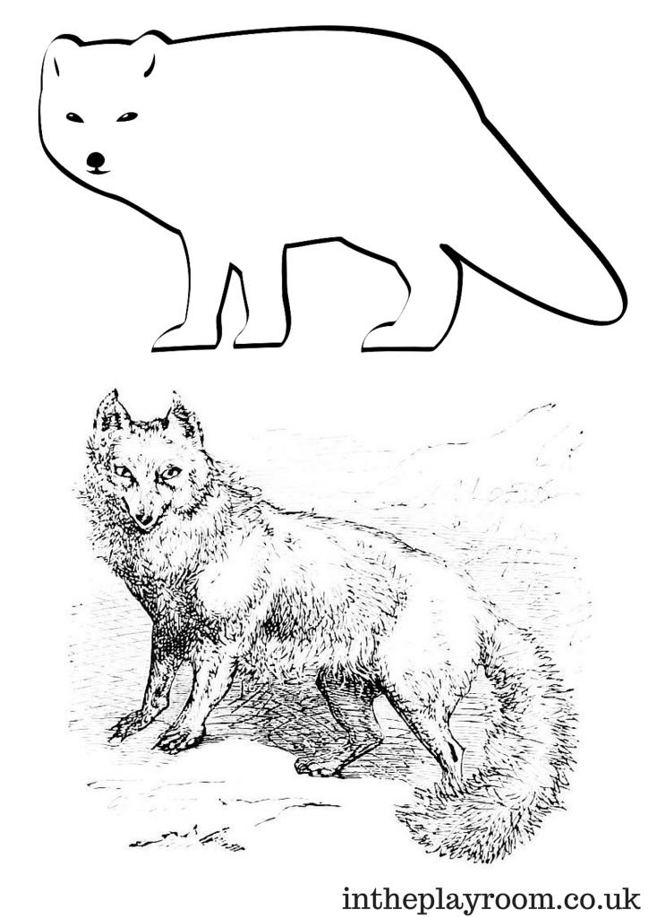 arctic animals coloring pages arctic animals song for children pages animals coloring arctic