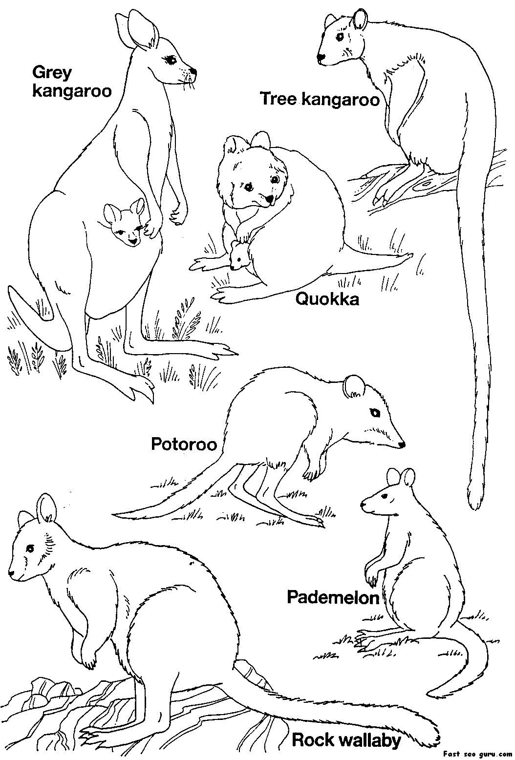 australia coloring pages australia day coloring pages for kids family holidaynet australia coloring pages 1 1
