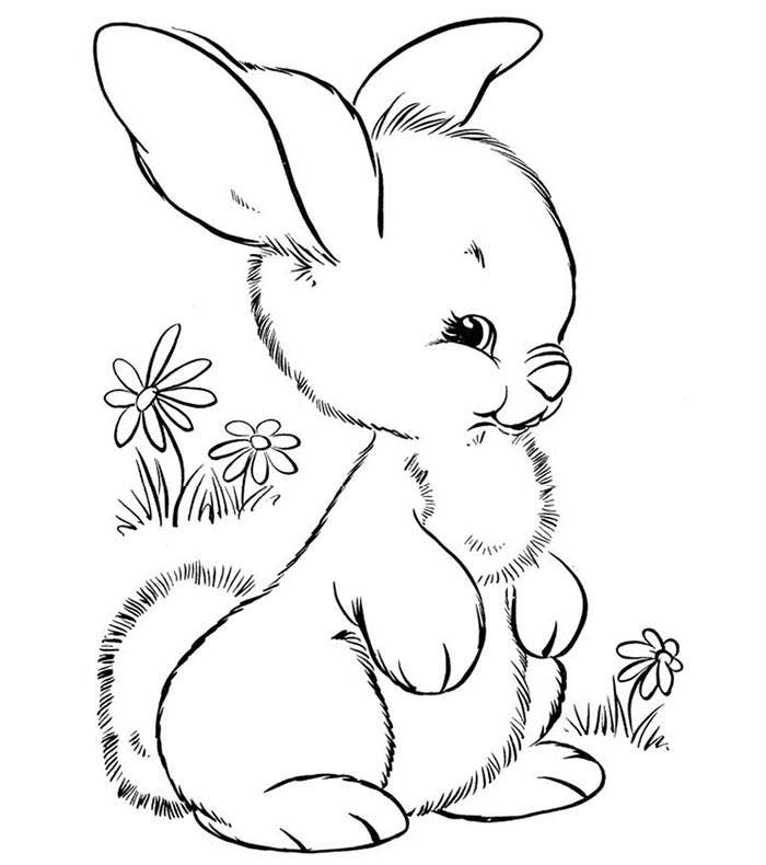 baby animal outlines 70 animal colouring pages free download print free animal baby outlines