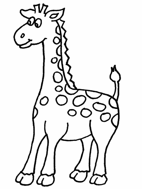baby giraffe pictures to color printable cute baby giraffe coloring page giraffe color baby to pictures
