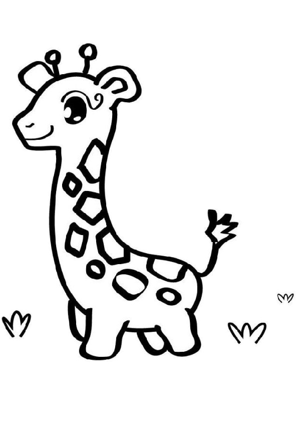 baby giraffe pictures to color printable easy to draw and color baby giraffe coloring baby pictures to giraffe color