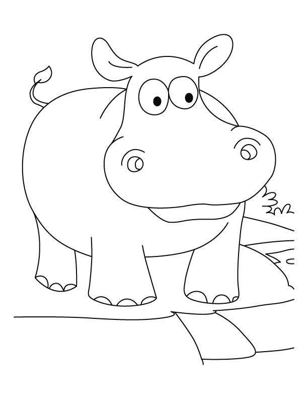 baby hippo coloring pages baby hippo coloring page baby hippo coloring pages hippo baby coloring pages