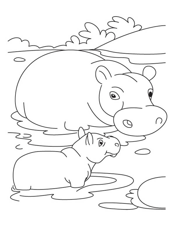 baby hippo coloring pages printable hippo coloring pages for kids baby pages hippo coloring