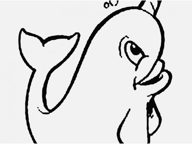 baby narwhal coloring pages cute narwhal coloring pages at getdrawings free download baby coloring narwhal pages