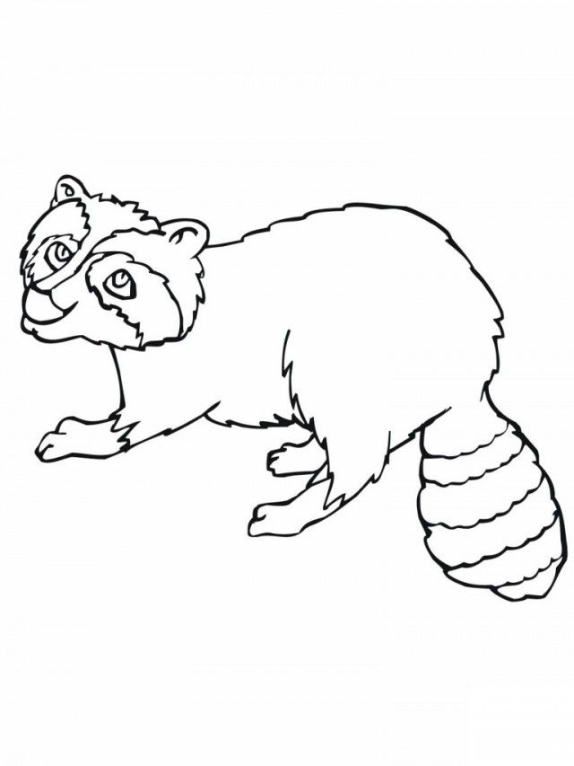 baby raccoon coloring page baby raccoon coloring pages coloring home page coloring baby raccoon