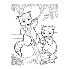 baby raccoon coloring page baby raccoon drawing at getdrawings free download raccoon coloring page baby