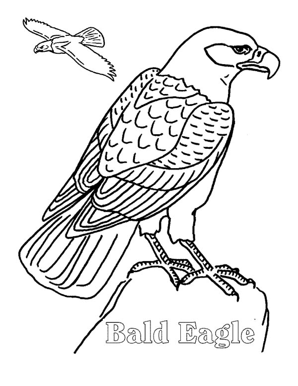 bald eagle coloring sheet bald eagle easy drawing at getdrawings free download bald eagle sheet coloring