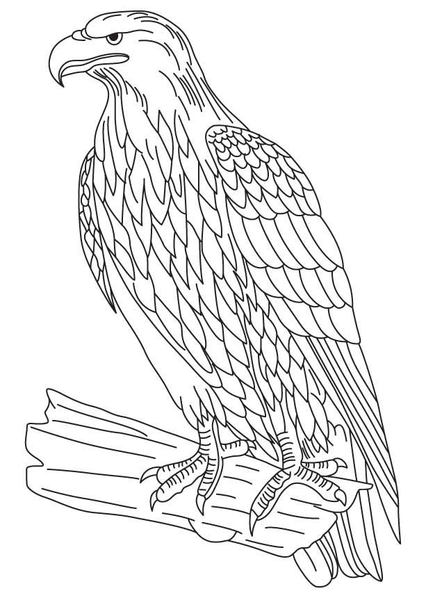 bald eagle coloring sheet printable bald eagle coloring pages for kids cool2bkids sheet eagle bald coloring