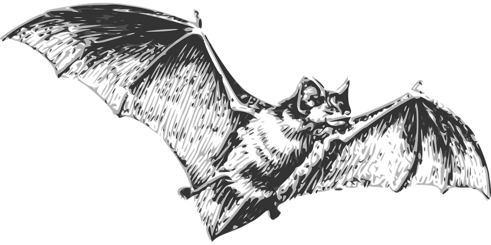 bat wings drawing bat wing clipart etc drawing bat wings