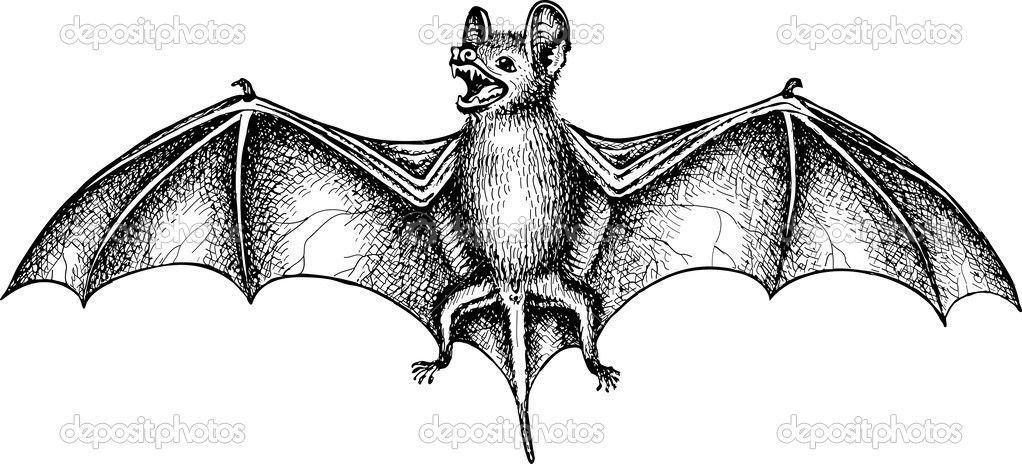 bat wings drawing bat wing tattoo design by cactuarzrule on deviantart bat wings drawing