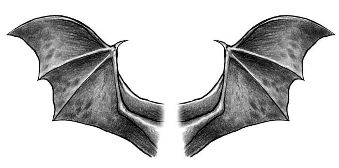 bat wings drawing great cover up for my bat wings melek çizim melek bat drawing wings
