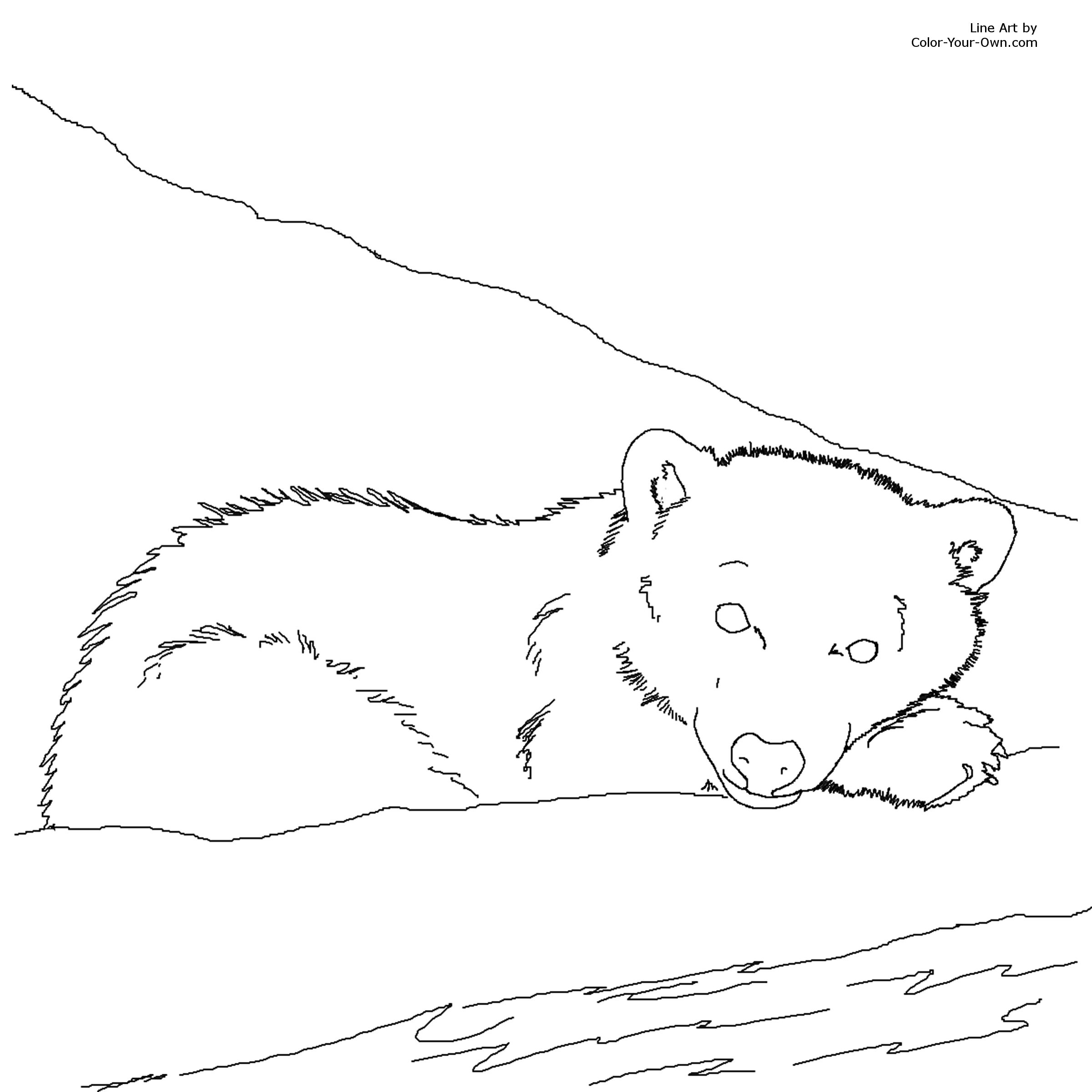 bear cub coloring pages bear cub clipart colouring page pencil and in color bear cub bear pages coloring