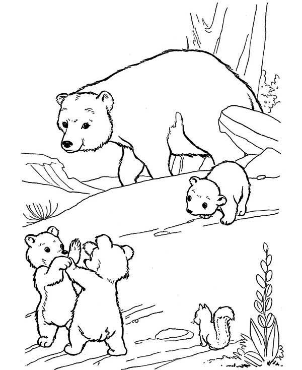 bear cub coloring pages bear cub coloring download bear cub coloring for free 2019 coloring bear cub pages
