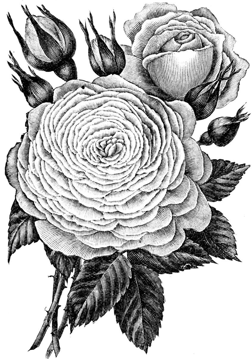 beautiful flowers coloring pages beautiful flowers detailed floral designs coloring book flowers pages beautiful coloring