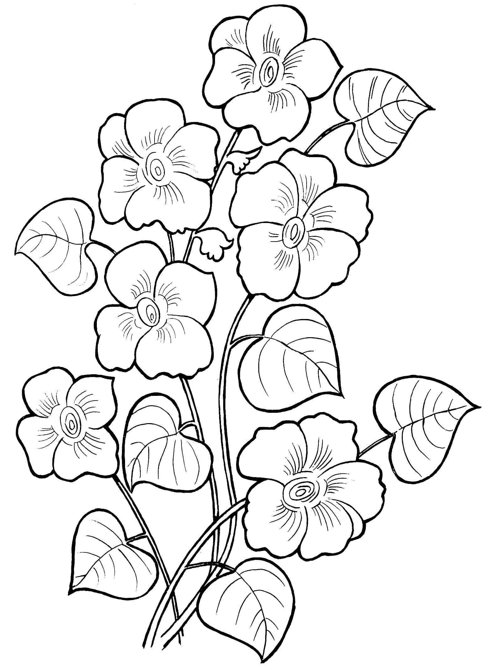 beautiful flowers coloring pages beautiful flowers flowers coloring pages for kids to beautiful coloring pages flowers