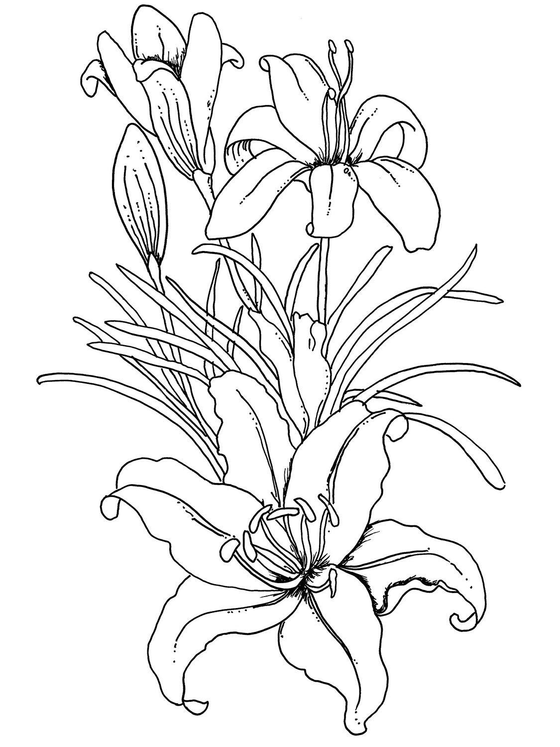 beautiful flowers coloring pages beautiful printable flowers coloring pages beautiful pages flowers coloring
