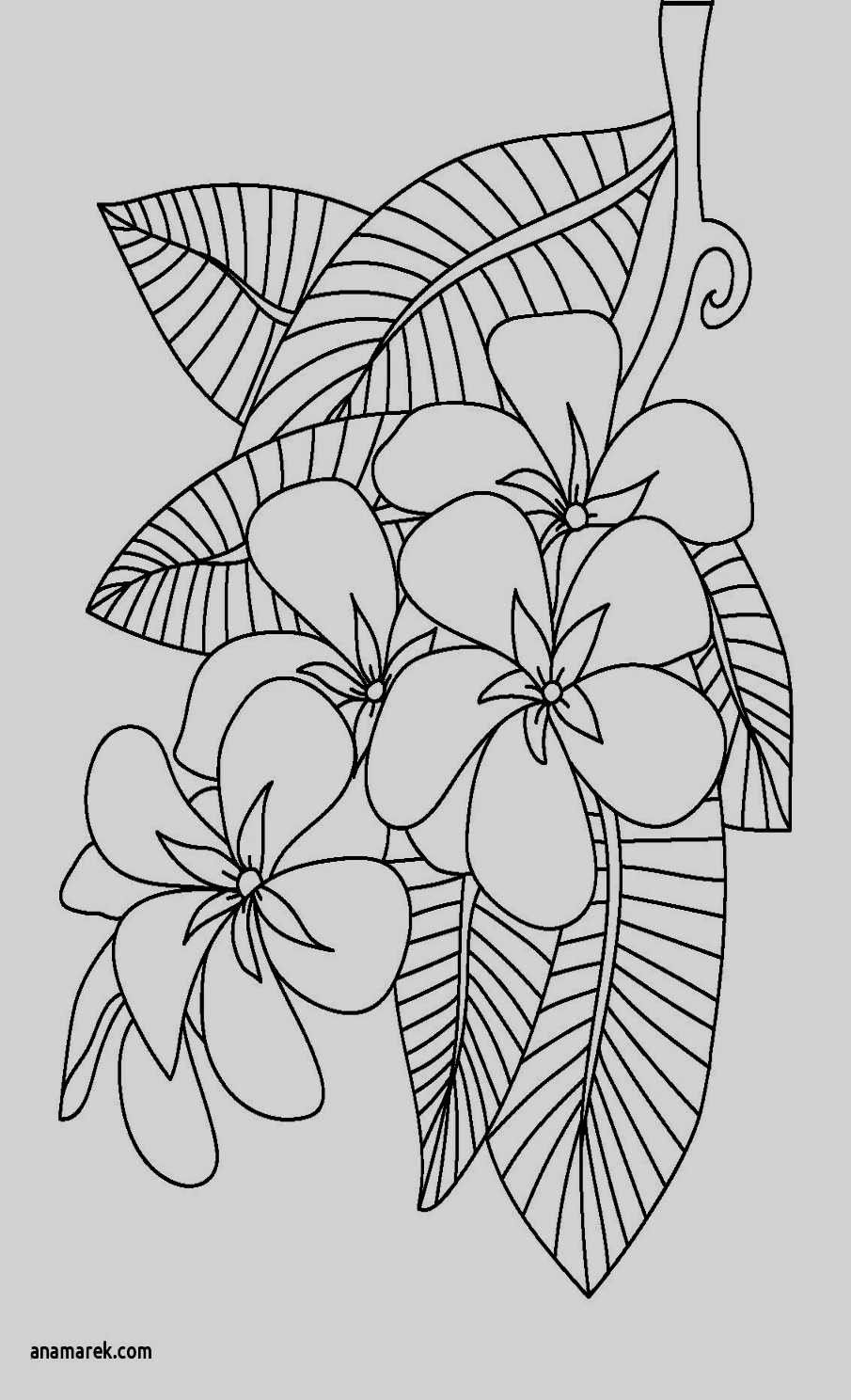 beautiful flowers coloring pages dover publications creative haven beautiful flower coloring beautiful pages flowers