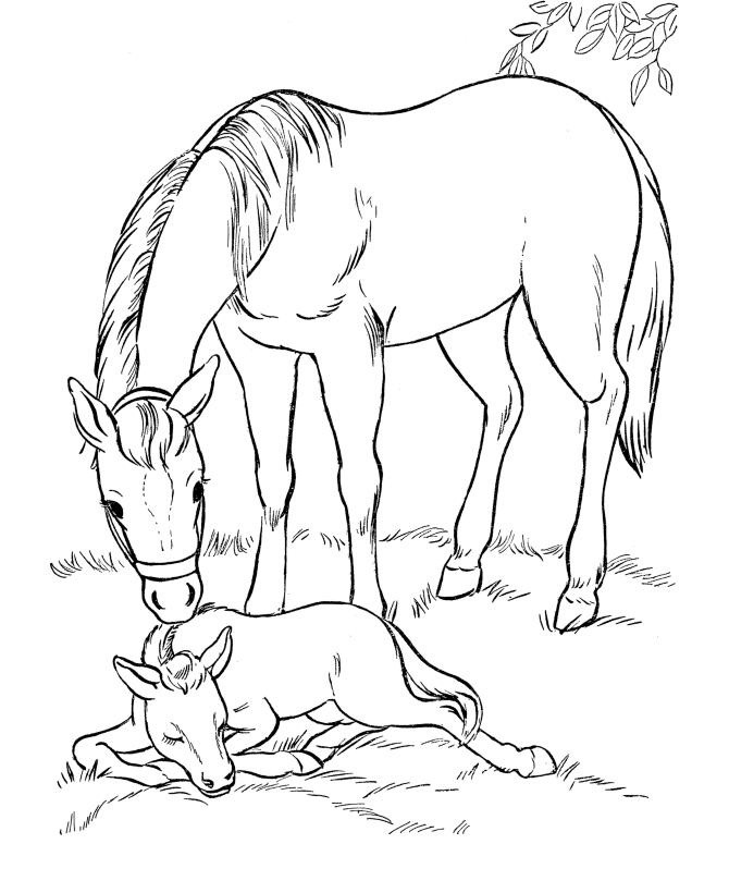 beautiful horse coloring pages the wonderful world of horses adult coloring colouring pages coloring beautiful horse