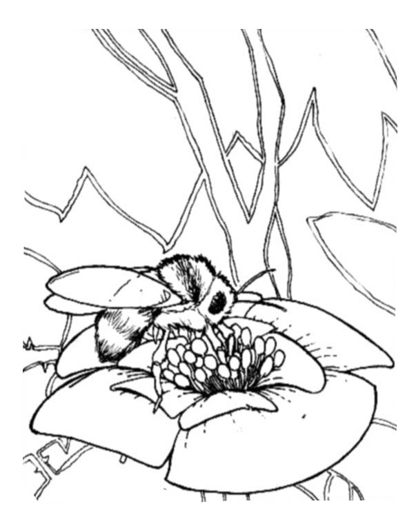 bee on flower coloring page bee coloring pages bee page on flower coloring