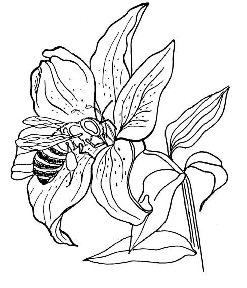 bee on flower coloring page bee eat from flower to make honey coloring page coloring sky coloring bee flower on page