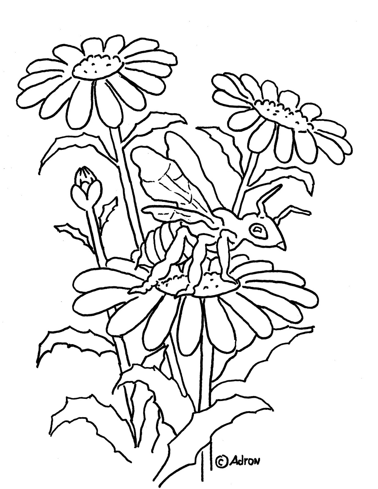 bee on flower coloring page coloring pages for kids by mr adron bee on flower bee flower coloring page on