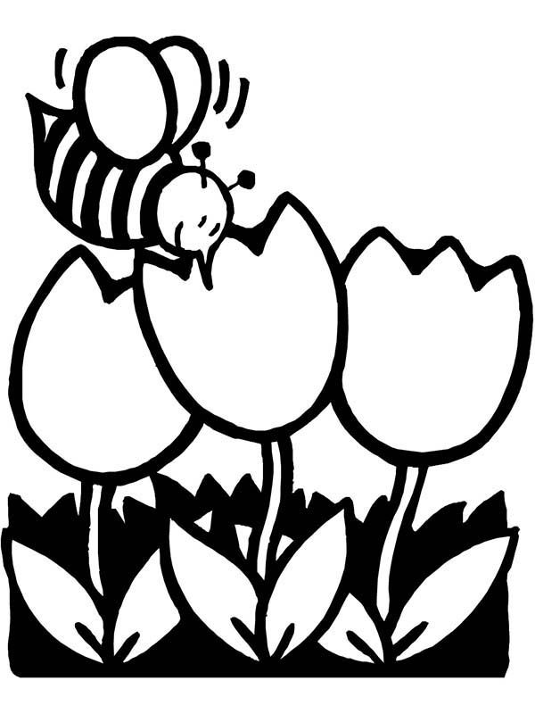 bee on flower coloring page coloring pages for kids by mr adron bee on flower flower on coloring page bee