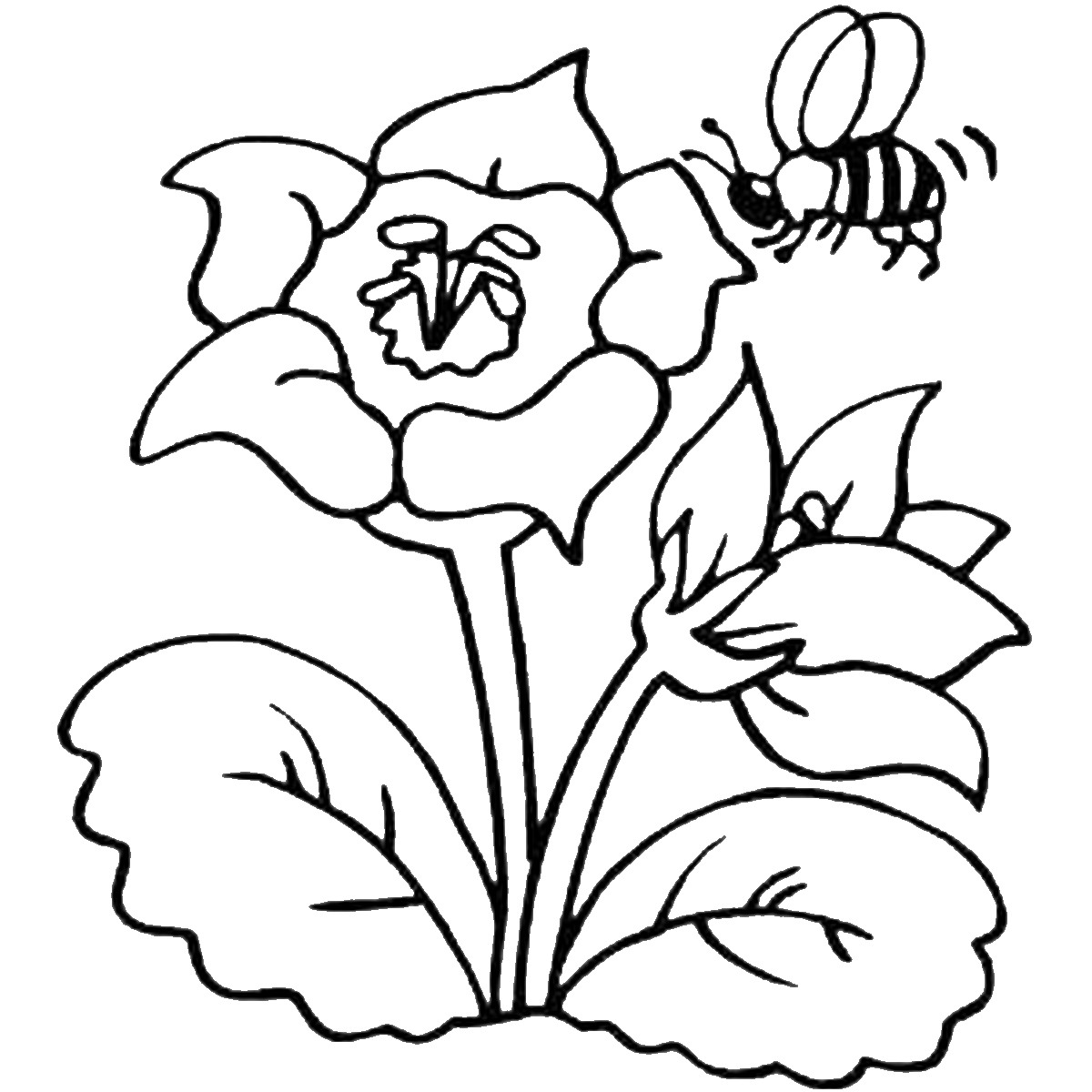 bee on flower coloring page flower wallpaper bees coloring pages realistic flower coloring bee page on